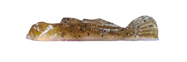 Natural Goby/Copper (G002-007)