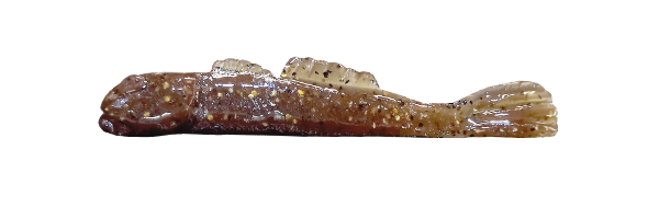 Brown Goby/Gold (G001-022)
