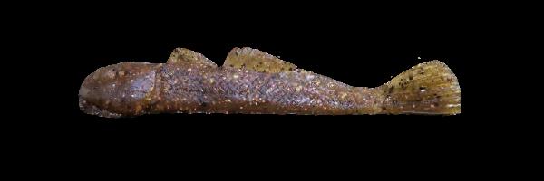 Copper Back (G001-012)