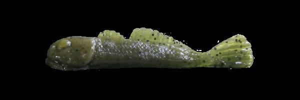 Green Pumpkin (G001-013)